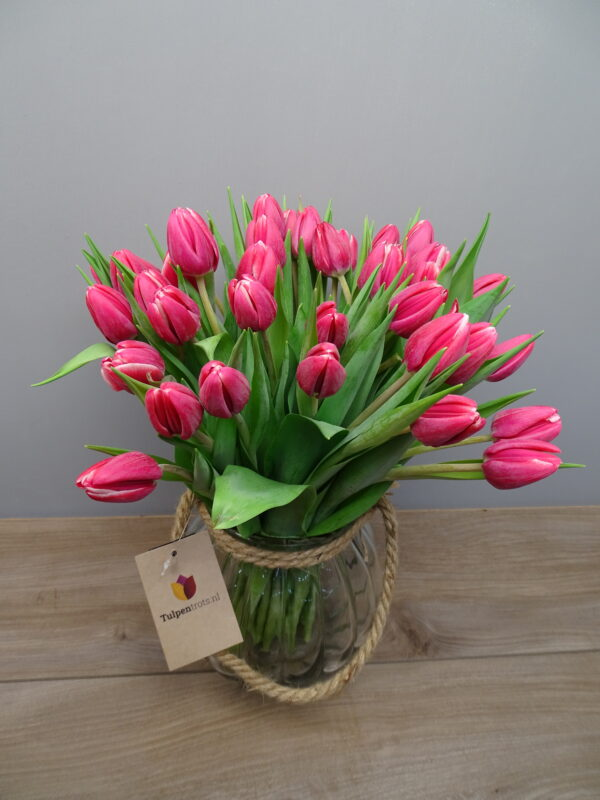 Tulpen Bloemen